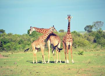 Safari in Tanzania con Sogno Africano Safaris